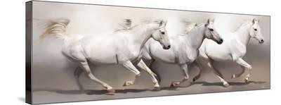 3 Shades of White-Paul Miners-Stretched Canvas Print