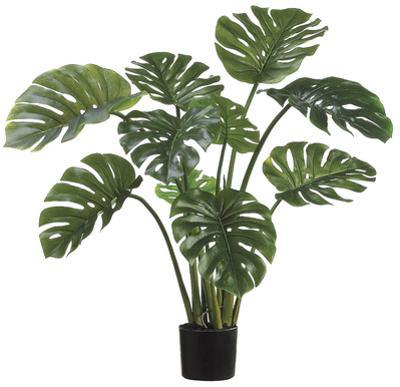 """39"""" Split Leaf Philodendron Plant *"""
