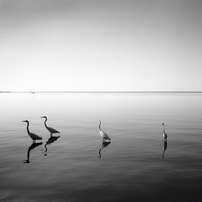 4 Herons-Moises Levy-Photographic Print