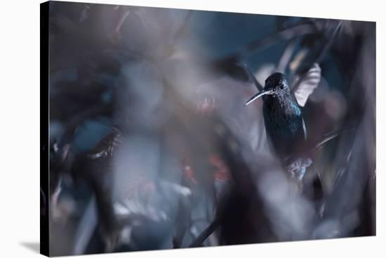 50 Hz-Fabien Bravin-Stretched Canvas Print