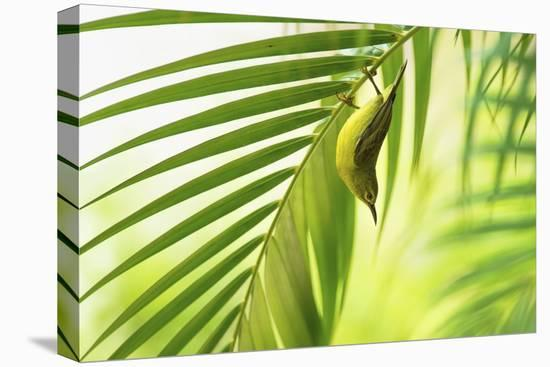 50 Shades Of Green-Daniele Bariviera-Stretched Canvas Print
