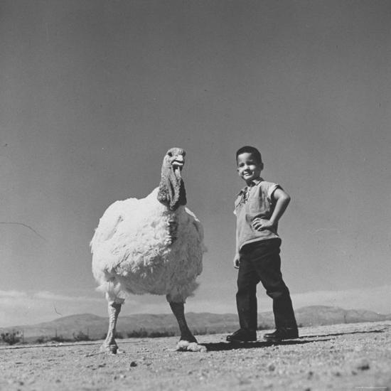 60 lb. Hybrid Turkey with 35 lb. Donny Bigfeather-Ralph Crane-Photographic Print