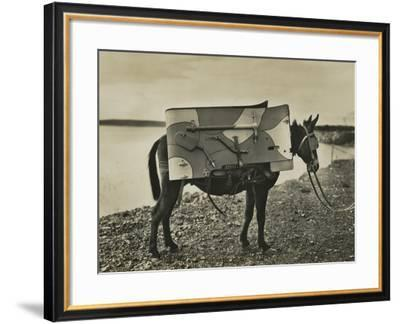7.5Cm 1930 Model Bofors Mountain Gun Carried by a Mule, 1930--Framed Photographic Print
