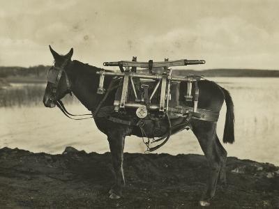 7.5Cm 1930 Model Bofors Mountain Gun Carried by a Mule, 1930--Photographic Print