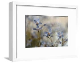 7173_I`m on my way-Heidi Westum-Framed Photographic Print