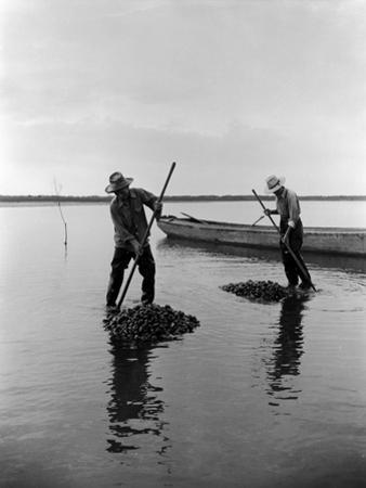 Clamming in Chincoteague 1948 by A. Aubrey Bodine