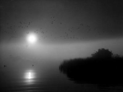 Duck Hunting by A. Aubrey Bodine