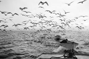 Gulls Chasing Behind 1960 by A. Aubrey Bodine