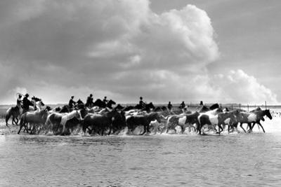 Pony Roundup by A. Aubrey Bodine
