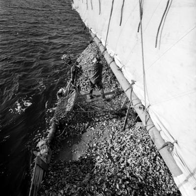 Shovelling Oysters by A. Aubrey Bodine
