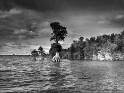 Trees in Lake Drummond by A. Aubrey Bodine