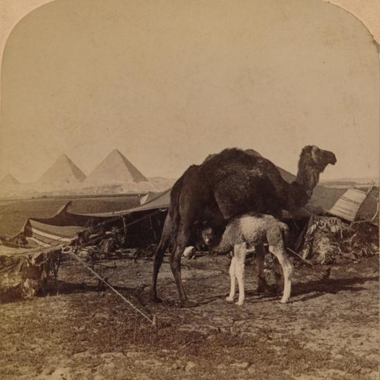 'A Baby of the Desert, Egypt', 1896-Unknown-Photographic Print