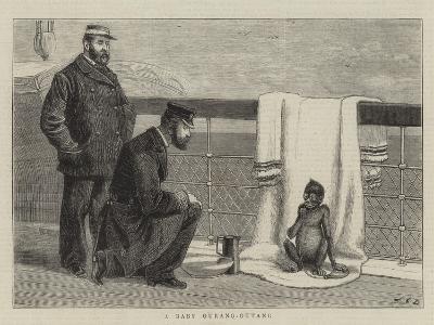A Baby Ourang-Outang-John Charles Dollman-Giclee Print