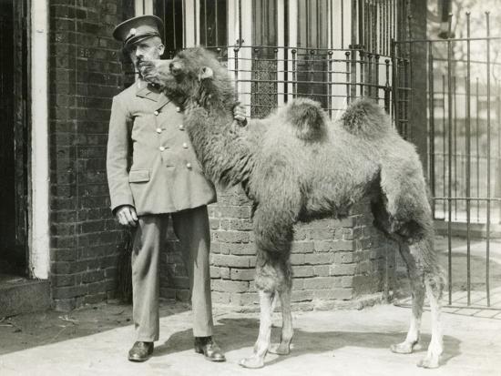 A Bactrian Camel Calf-Frederick William Bond-Photographic Print