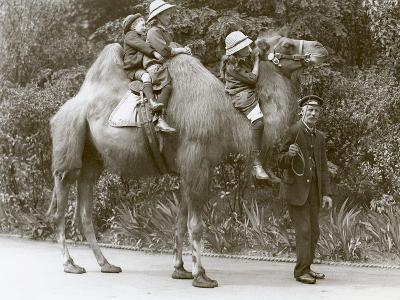 A Bactrian Camel Ride with Keeper and Three Children at London Zoo, May 1914-Frederick William Bond-Photographic Print