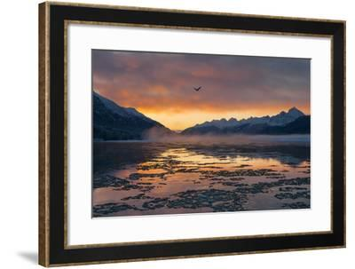 A Bald Eagle, Haliaeetus Leucocephalus, Flies over an Icing Chilkat River at Dawn-Jak Wonderly-Framed Photographic Print