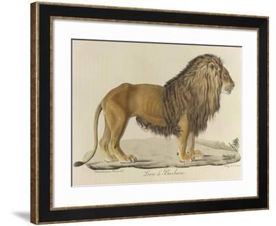 a Barbary Lion--Framed Giclee Print