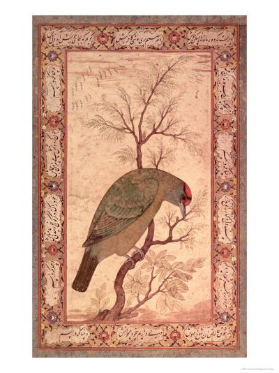 A Barbet (Himalayan Blue-Throated Bird) Jahangir Period, Mughal, 1615-Ustad Mansur-Giclee Print