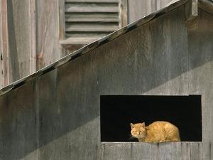 A Barn Cat Basks in the Sunlight