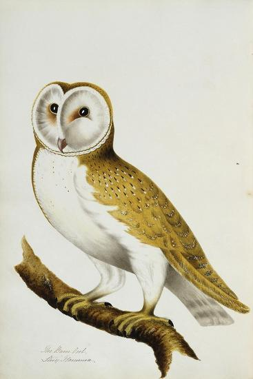 A Barn Owl, Part of an Album of Watercolours of Birds and their Eggs, C. 1800--Giclee Print