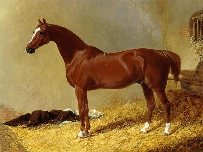 A Bay Racehorse in a Stall-John Frederick Herring I-Giclee Print