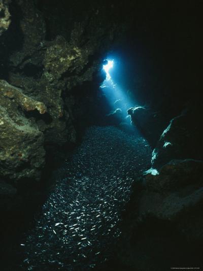 A Beam of Sunlight Illuminates an Underwater Cave-Raul Touzon-Photographic Print