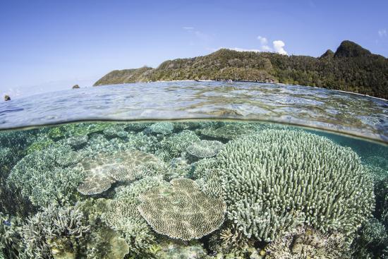 A Beautiful Coral Reef in Raja Ampat, Indonesia-Stocktrek Images-Photographic Print
