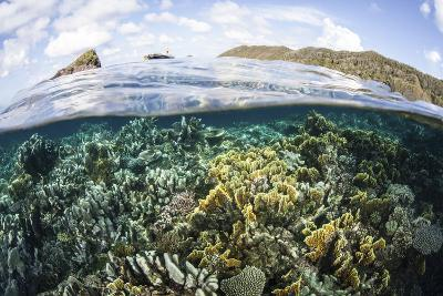 A Beautiful Coral Reef in Raja Ampat, Indonesia-Stocktrek Images-Photographic Print