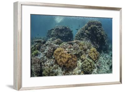 A Beautiful Coral Reef Thrives in Komodo National Park, Indonesia-Stocktrek Images-Framed Photographic Print