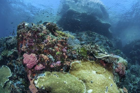 A Beautiful Coral Reef Thrives on an Underwater Slope in Indonesia-Stocktrek Images-Photographic Print