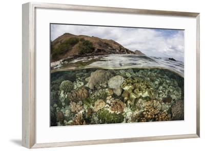 A Beautiful Reef Grows in Komodo National Park, Indonesia-Stocktrek Images-Framed Photographic Print