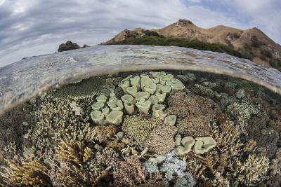 A Beautiful Reef Grows in Komodo National Park, Indonesia-Stocktrek Images-Photographic Print