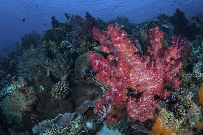 A Beautiful Soft Coral Colony on a Coral Reef in Indonesia-Stocktrek Images-Photographic Print