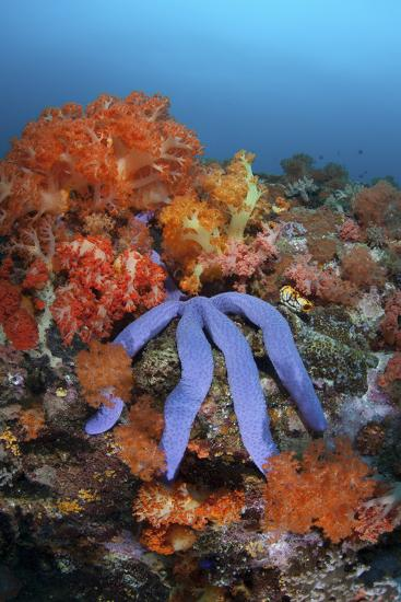 A Beautiful Starfish Lays on a Thriving Reef in Indonesia-Stocktrek Images-Photographic Print