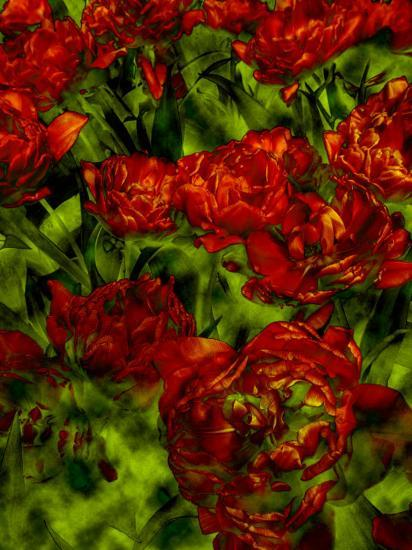A Bed Of Red Curly Tulips Keukenhof Holland Photographic Print By