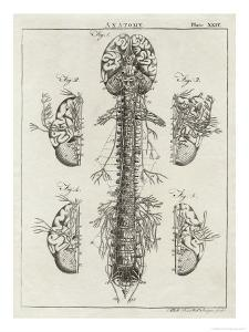 Brain and Spinal Column by A^ Bell