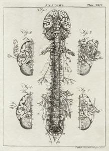 Brain and Spinal Column by A. Bell