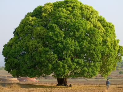 A Big Tree-Keren Su-Photographic Print