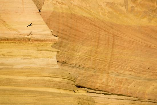 A Bird Flies at Sunrise Past Sandstone Cliffs of Isla San Jose-Michael Melford-Photographic Print