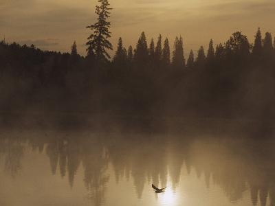 A Bird Flies Low over Fog-Shrouded Lake Superior-Medford Taylor-Photographic Print