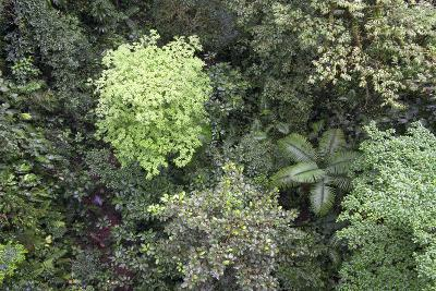 A Birds-Eye-View of Different Shades of Green from Trees Making Up the Forest-Stacy Bass-Photographic Print