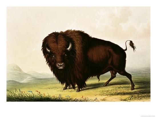 A Bison, circa 1832-George Catlin-Giclee Print