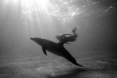 A Black and White Image of a Bottlenose Dolphin and Snorkeller Interacting Contre-Jour-Paul Springett-Photographic Print