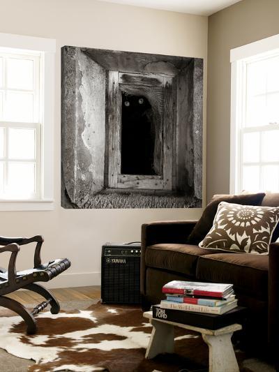 A Black Cat Inside a Window-Luis Beltran-Loft Art