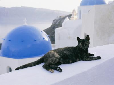 A Black Cat Sitting Atop a Low Wall-Todd Gipstein-Photographic Print