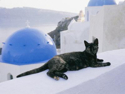 https://imgc.artprintimages.com/img/print/a-black-cat-sitting-atop-a-low-wall_u-l-p4du6u0.jpg?p=0
