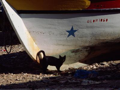A Black Cat Stands Next to the Bow of a Painted Wooden Fishing Boat-Medford Taylor-Photographic Print
