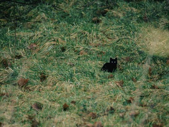 A Black Cat-Stephen Alvarez-Photographic Print