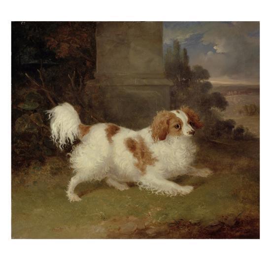 A Blenheim Spaniel, c.1820-30-William Webb-Giclee Print