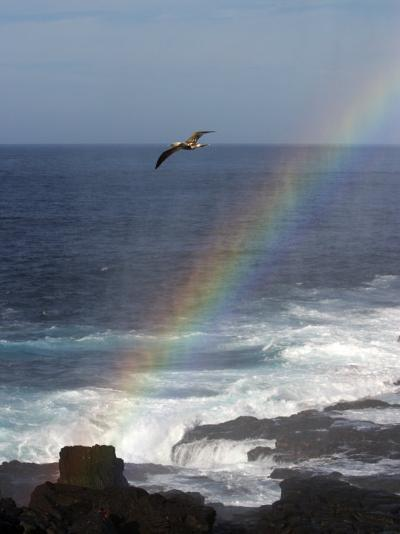 A Blue Footed Booby Soars Above a Rainbow on Espanola Island-Ralph Lee Hopkins-Photographic Print